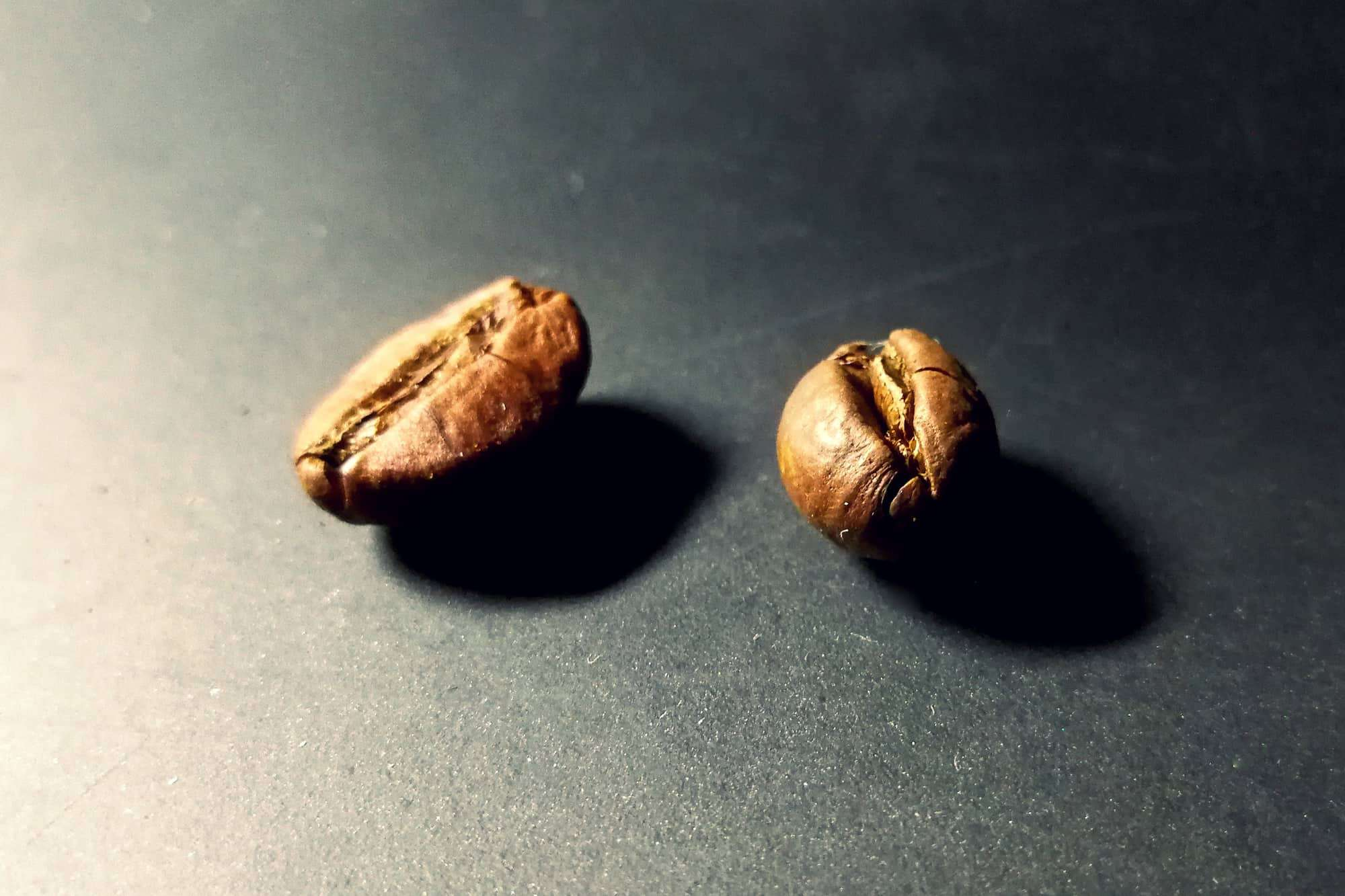 peaberry coffee bean and normal bean