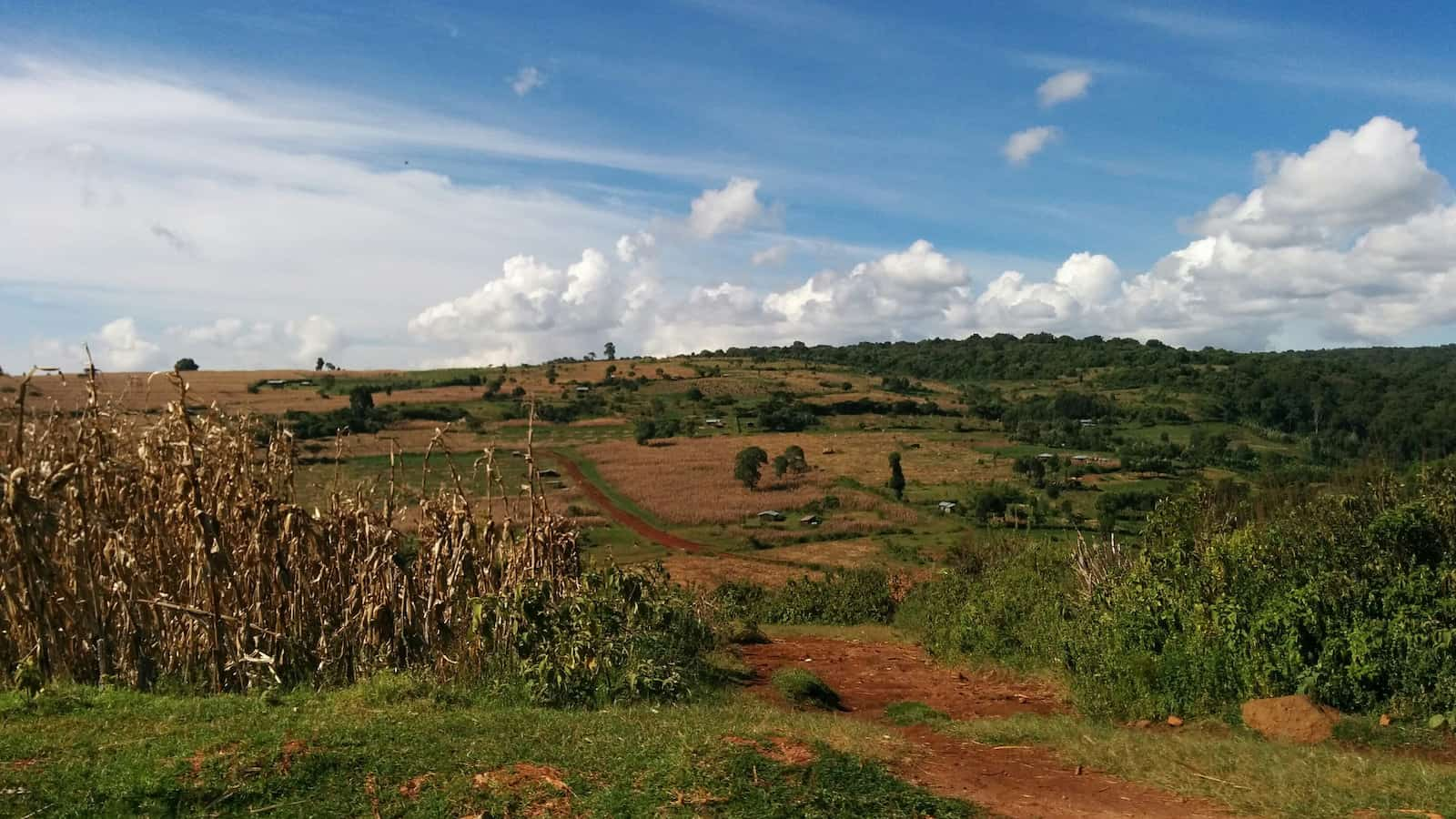 kenya farms