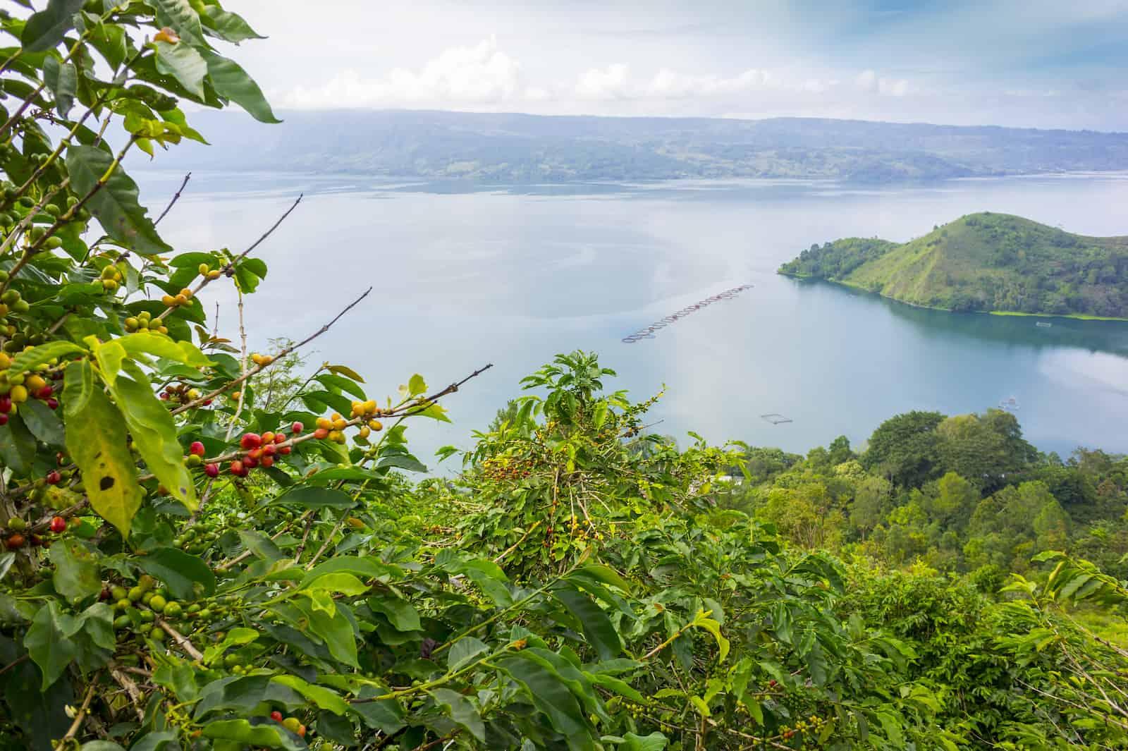 lake toba, indonesia from coffee farm