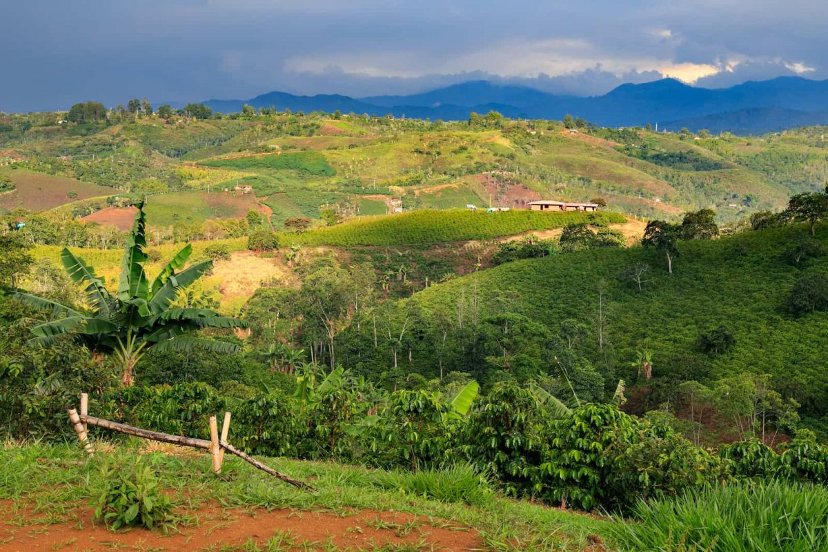 all about colombian coffee