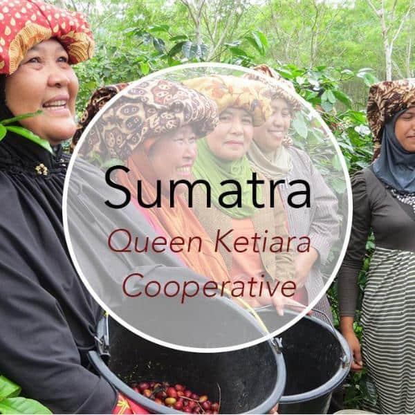 Sumatra_Queen_Ketiara-335